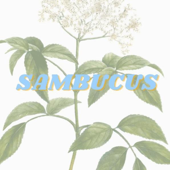 Sambucus brand